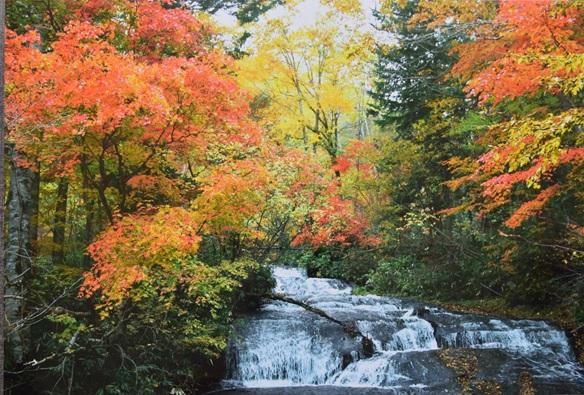 渓流の秋彩