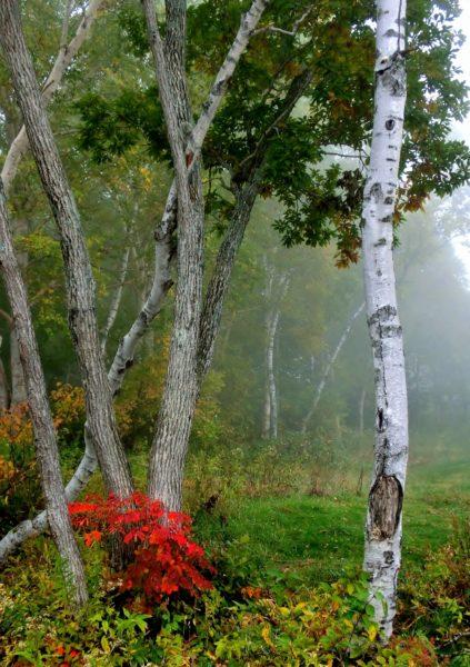 朝もやの林