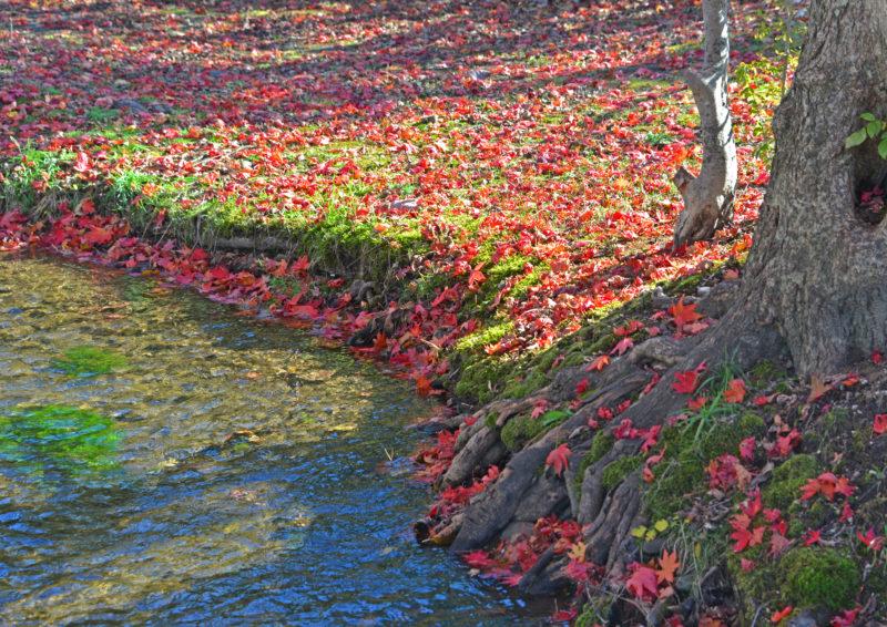 水辺の落ち葉